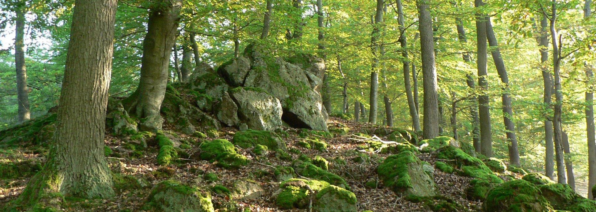 Wald – Nationalpark Kellerwald Edersee